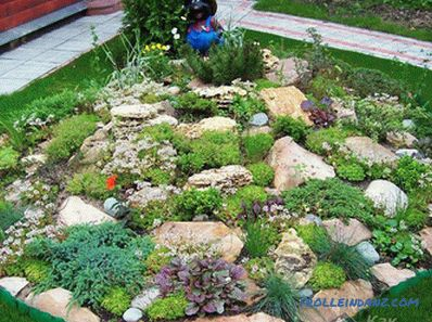 How to make an alpine hill with your own hands + photo