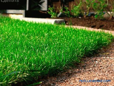 Laying a turf do-it-yourself