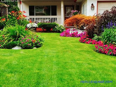 What lawn to choose to give?
