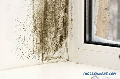 How to get rid of mold in the apartment with their own hands