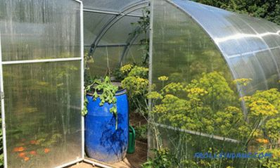 How to choose a greenhouse from polycarbonate