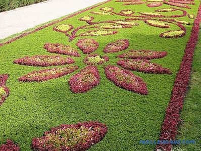 Flower beds and flower beds with their own hands + photo