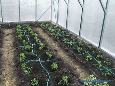 Drip irrigation greenhouses do it yourself
