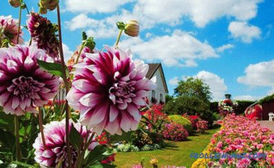 What flowers to plant in the country to bloom